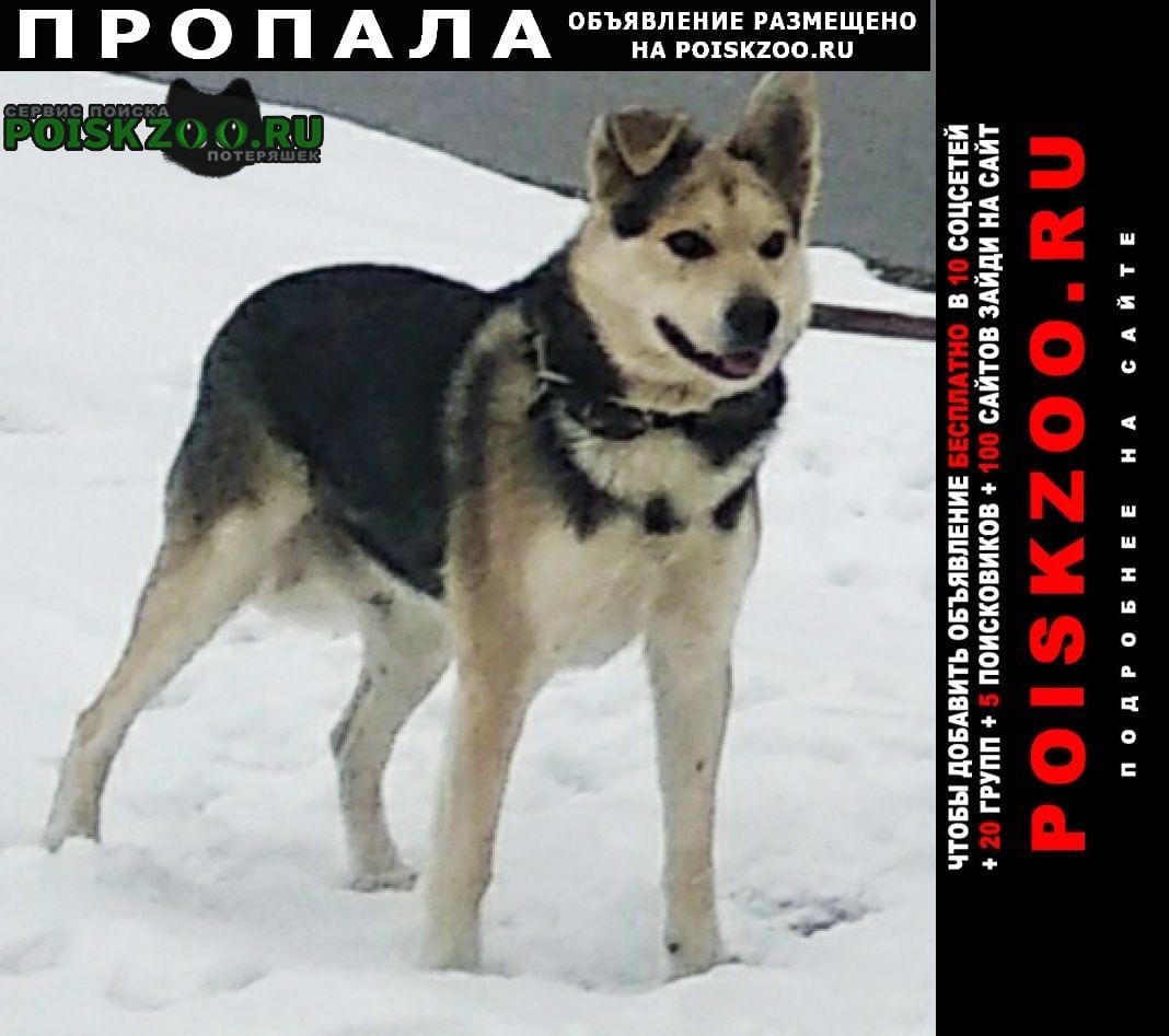 Ульяновск Пропала собака кличка-кузя