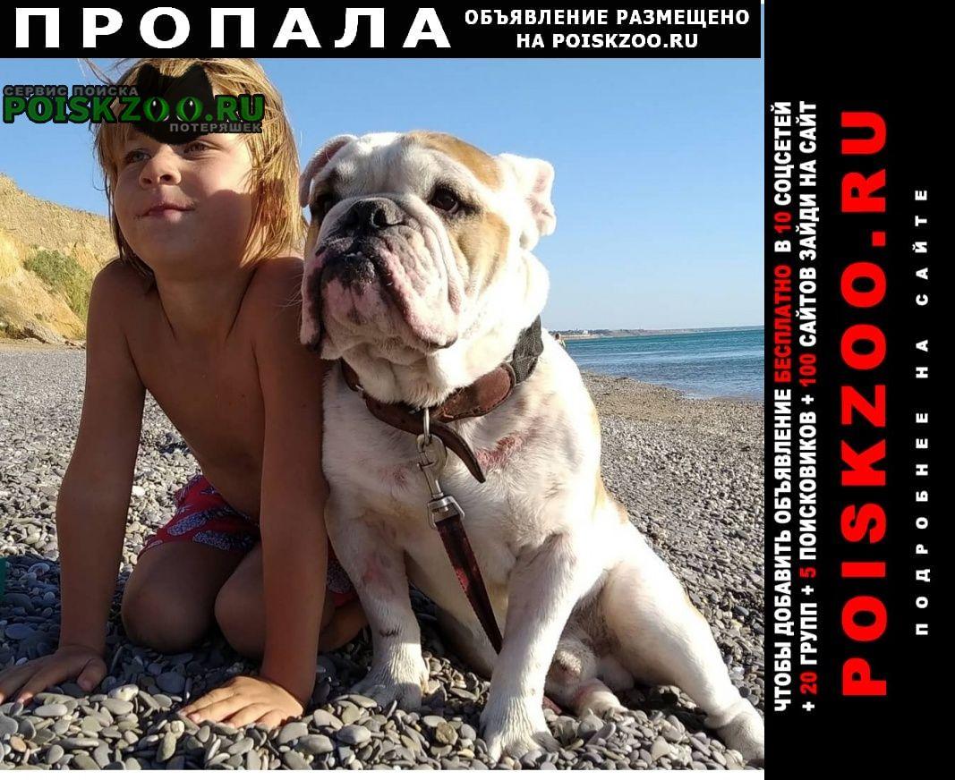 Симферополь Пропала собака английский бульдог, 3 года, кобель