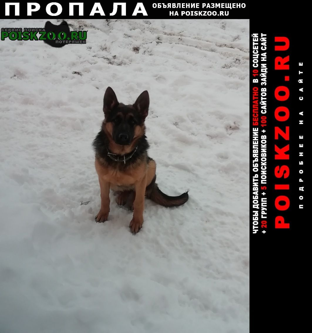 Пропала собака 17 числа в районе дачь каштан. Балаково
