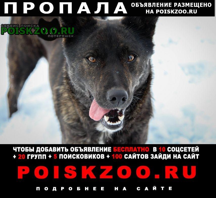 Пропала собака в николаевке Красноярск