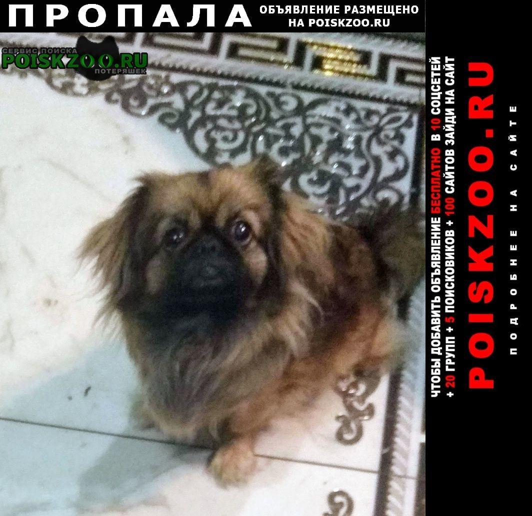 Пропала собака в районе сенного рынка ул.северн Краснодар
