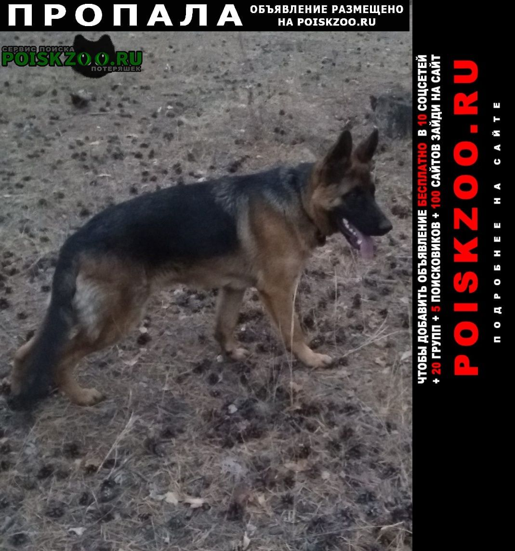 Пропала собака Чита
