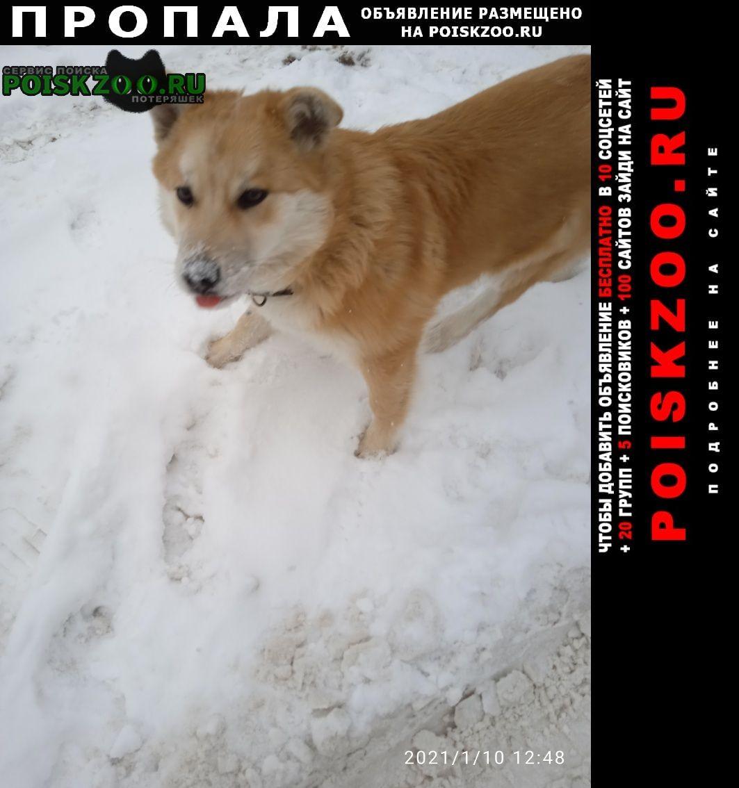 Пропала собака Дзержинск