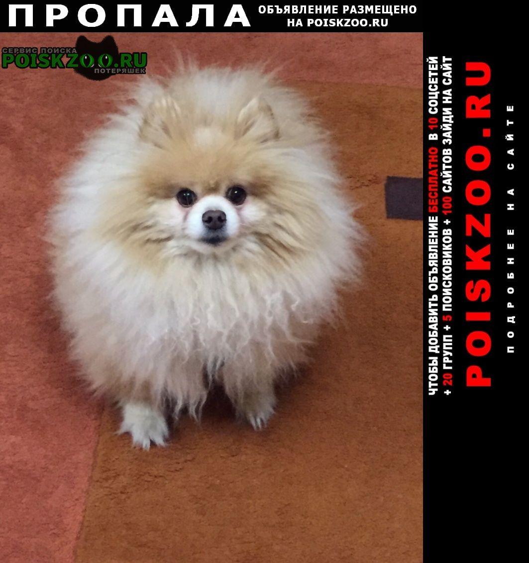 Пропала собака украли собаку в святошинском районе Киев