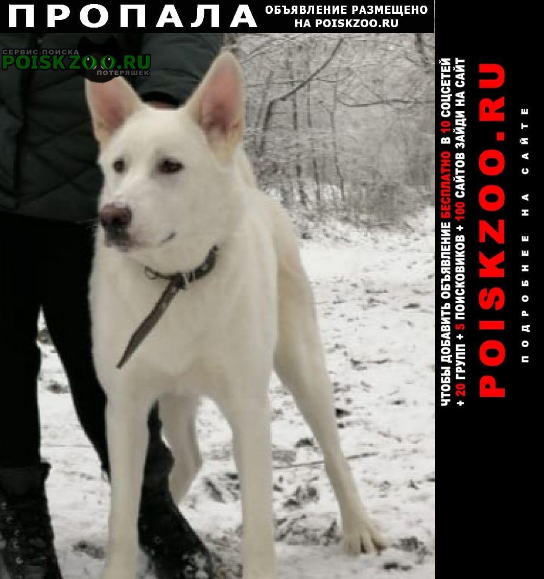 Пропала собака Владикавказ