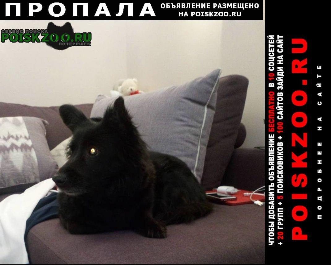 Москва Пропала собака чёрная дворняжка сао