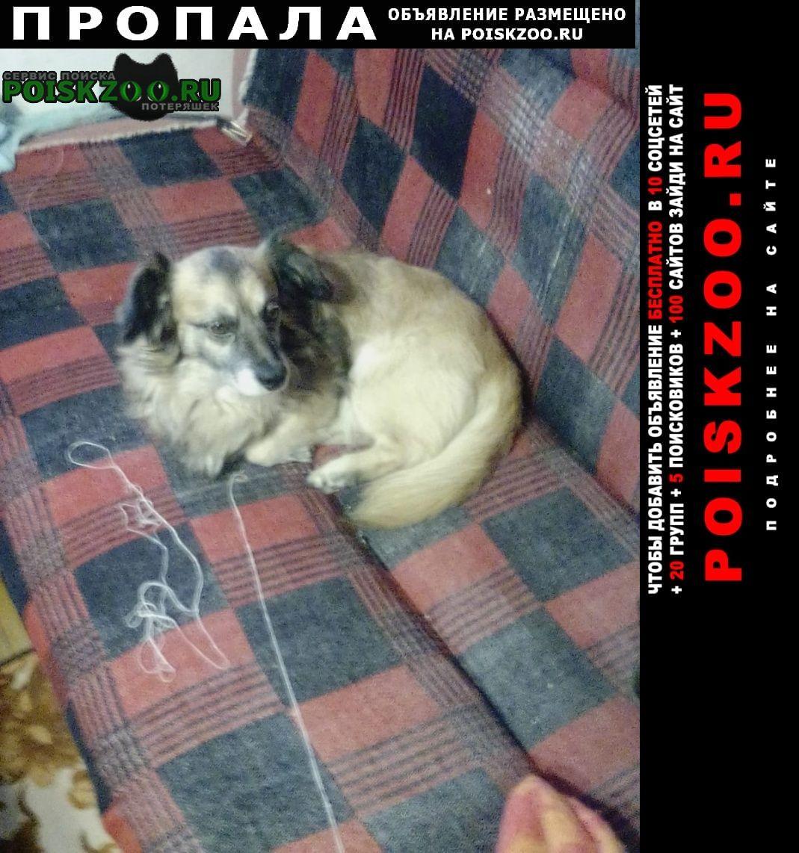 Нехаевский Пропала собака просим помоч в поиске нашего бима