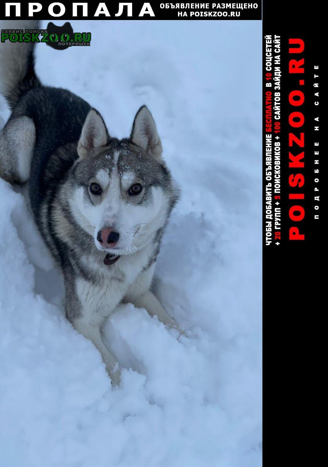 Пропала собака вознаграждение гарантируется Москва