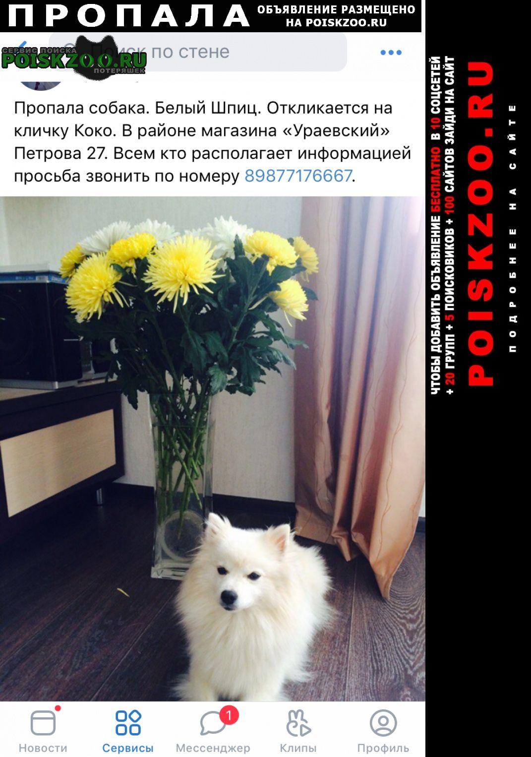 Йошкар-Ола Пропала собака