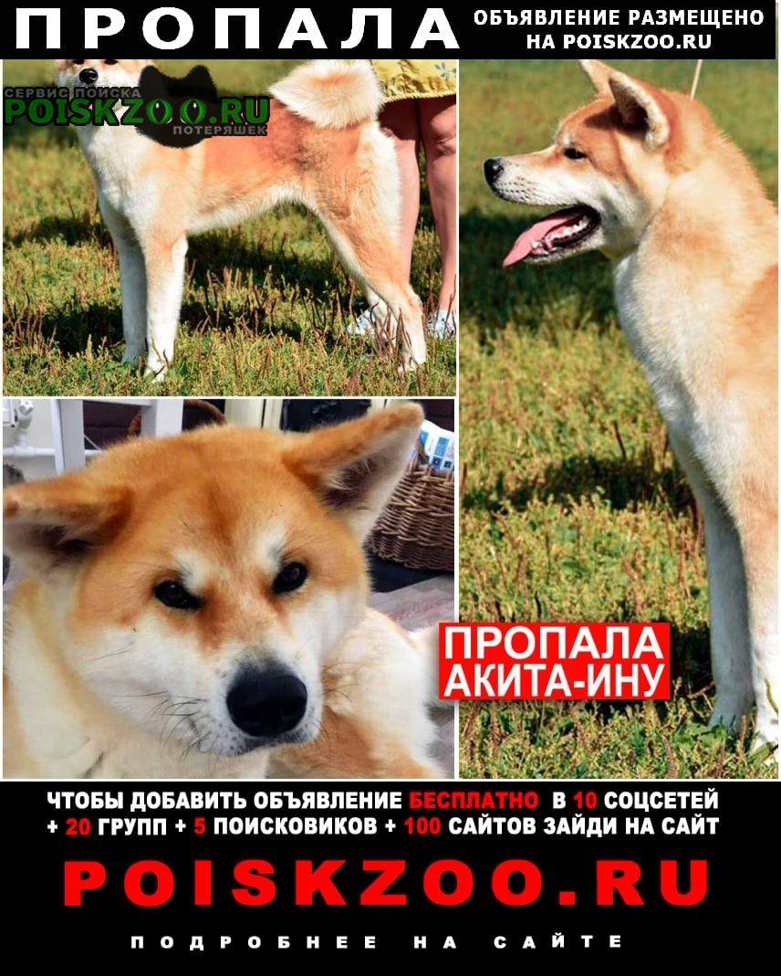 Пропала собака акита-ину Москва