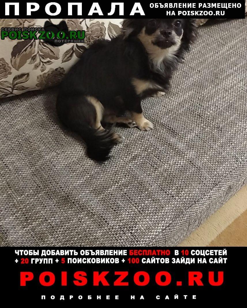 Кемерово Пропала собака