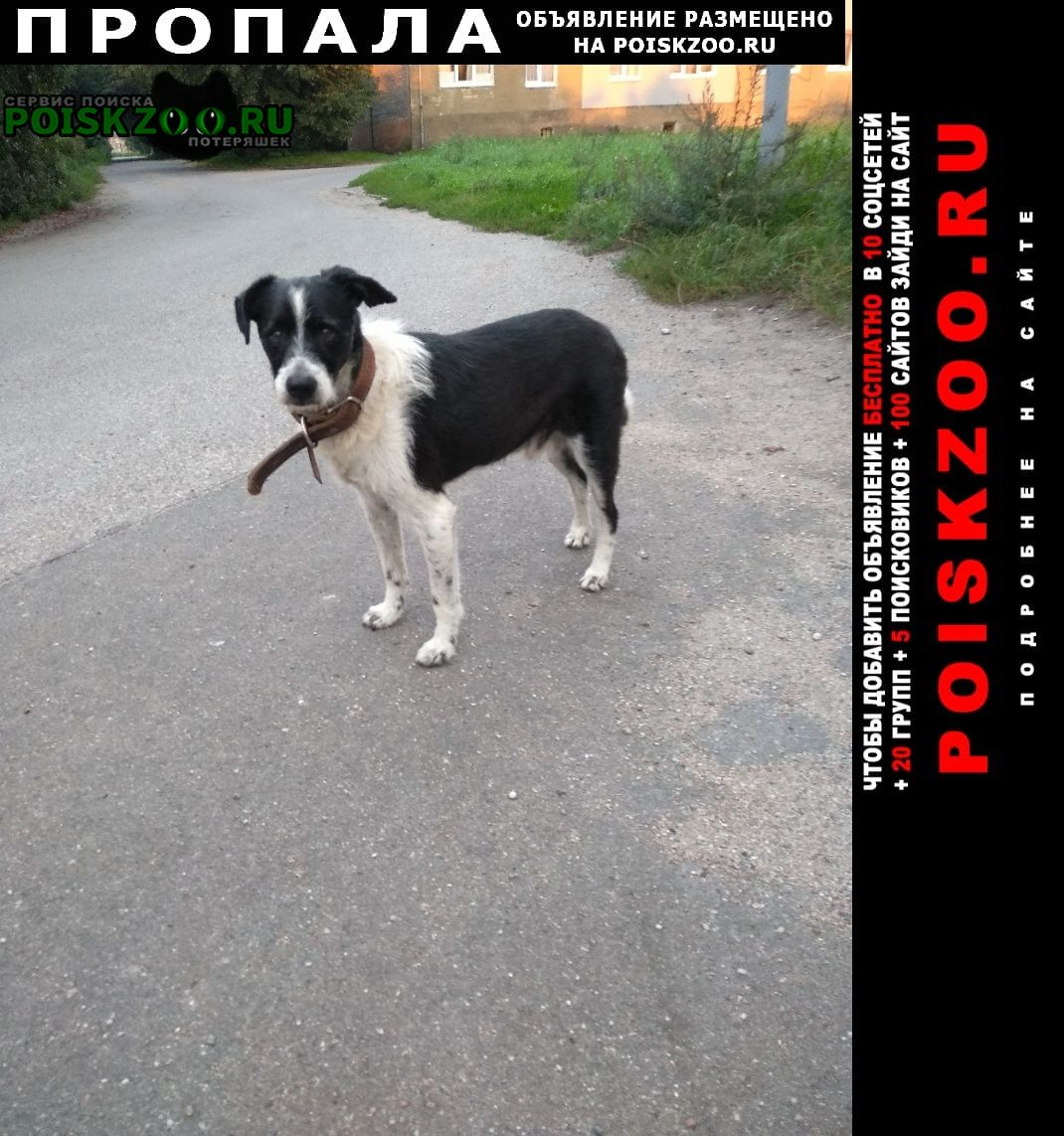 Пропала собака старичок тоша. г. Калининград (Кенигсберг)