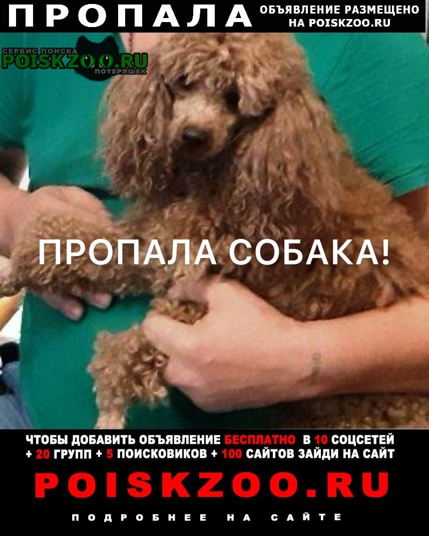 Пропала собака вознаграждение Нижний Новгород