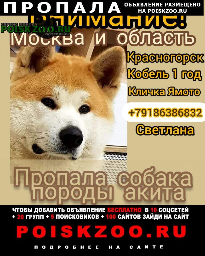 Пропала собака кобель Красногорск