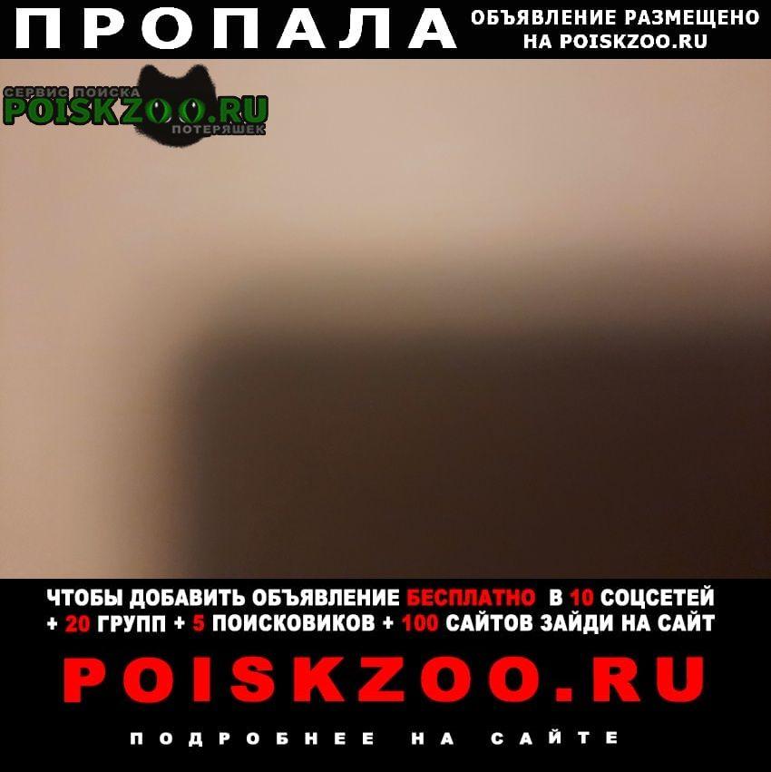 Пропала собака кобель Нижний Новгород