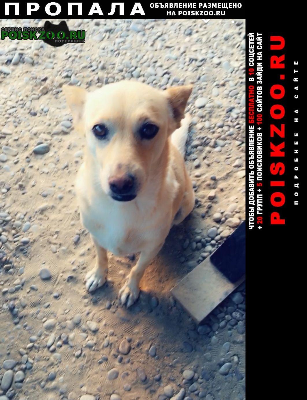 Пропала собака Невинномысск