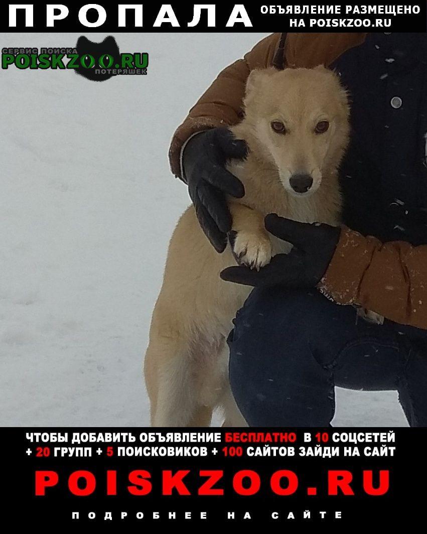 Пропала собака кобель Гороховец