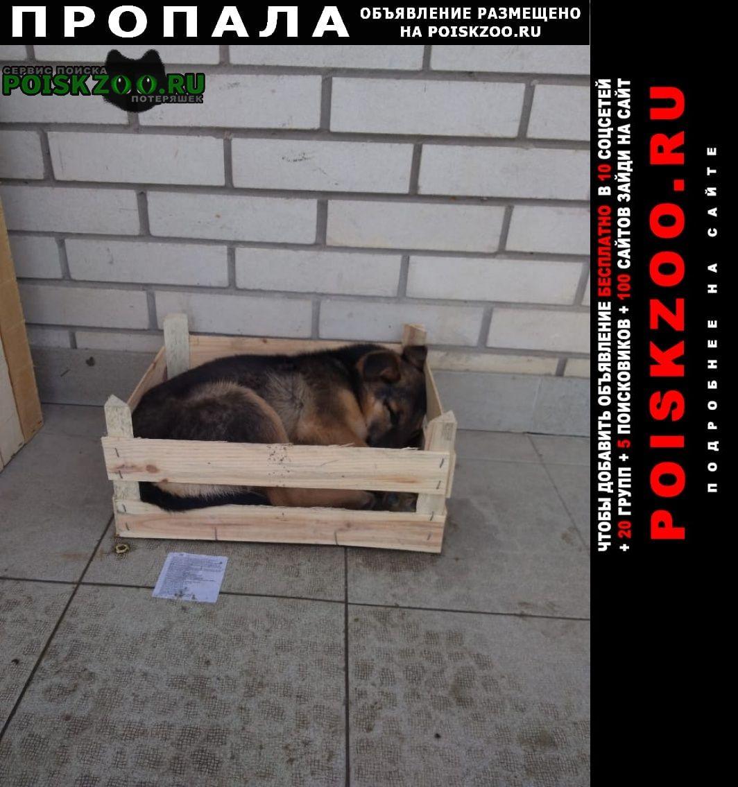 Пропала собака ищем с. Ростов-на-Дону