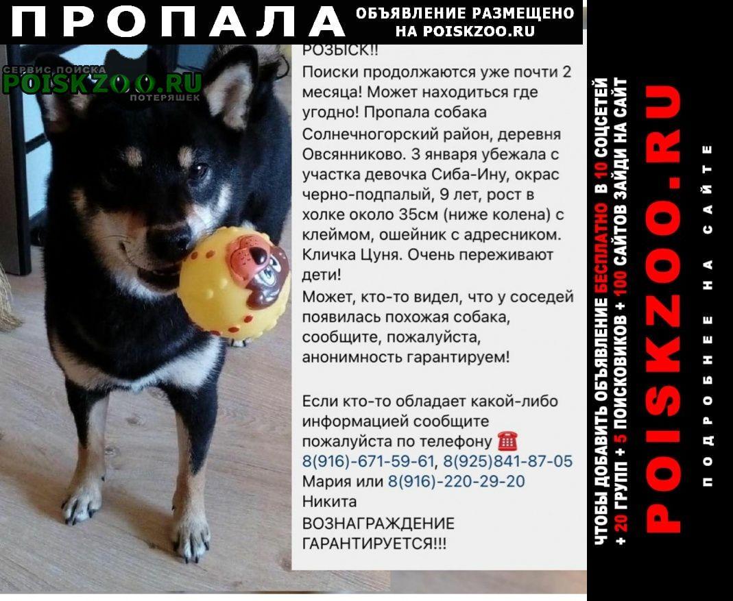 Пропала собака сиба-ину Москва