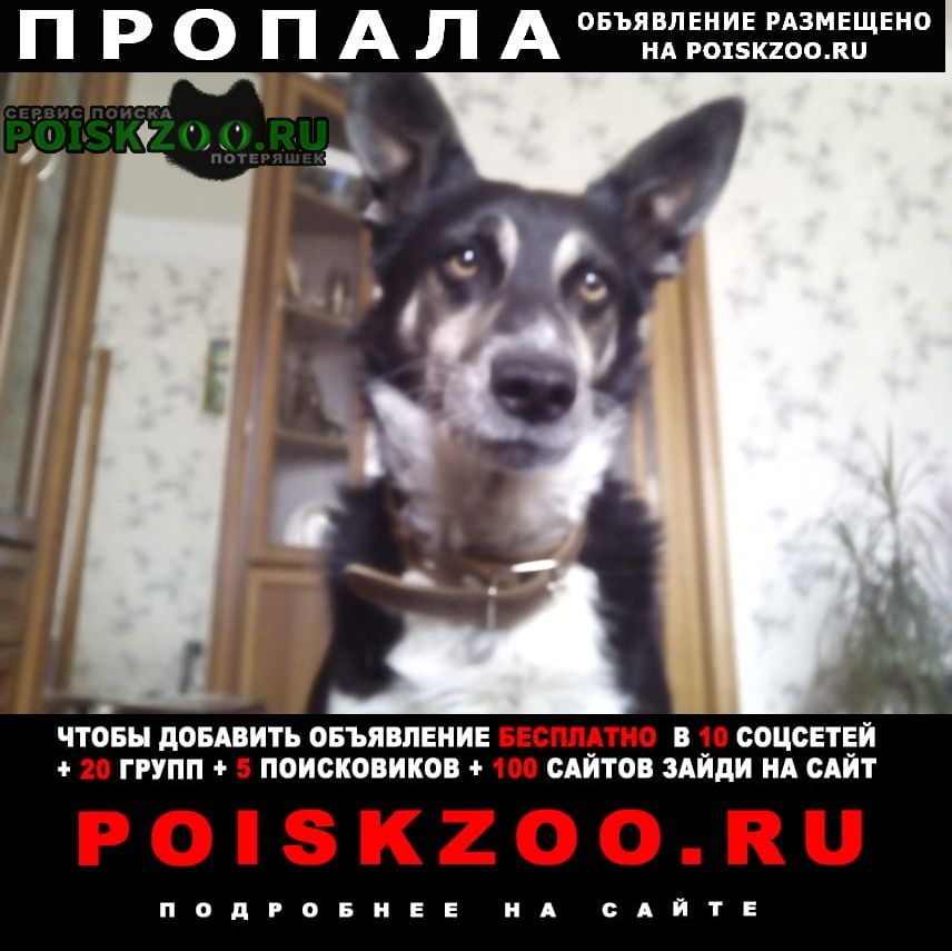 Пропала собака кобель Тула