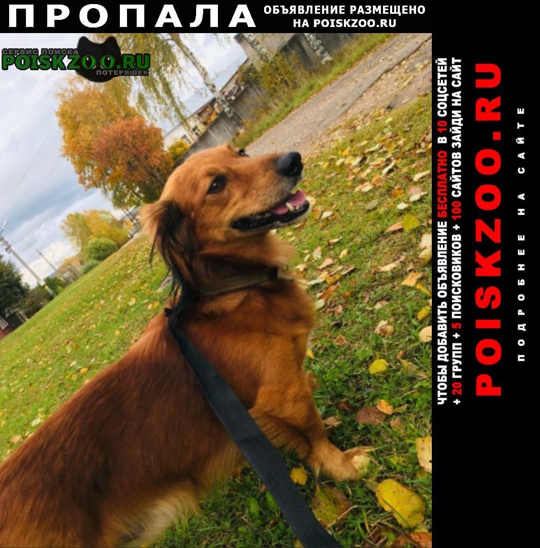 Пропала собака кобель Боровичи