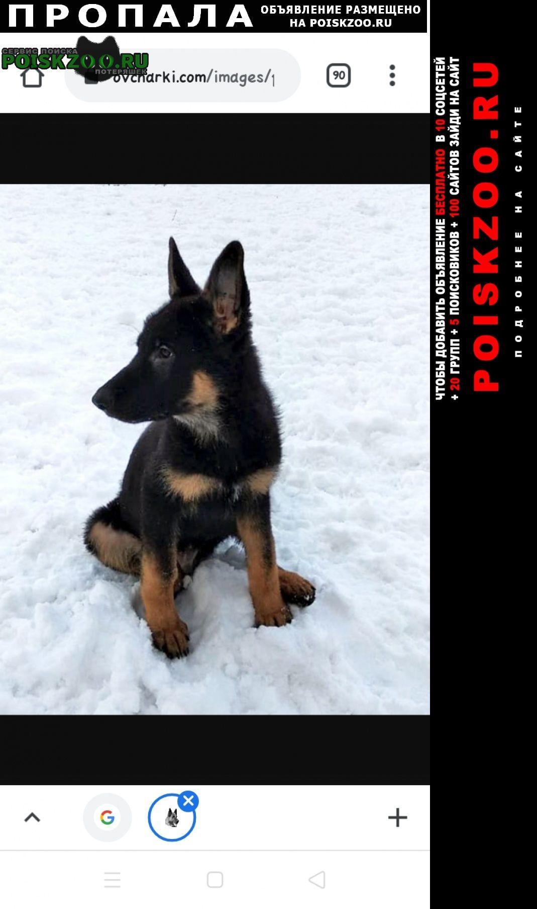 Пропала собака кобель щенок Владивосток