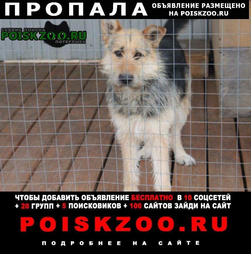 Пропала собака дворняжка в районе молебки Верхняя Пышма
