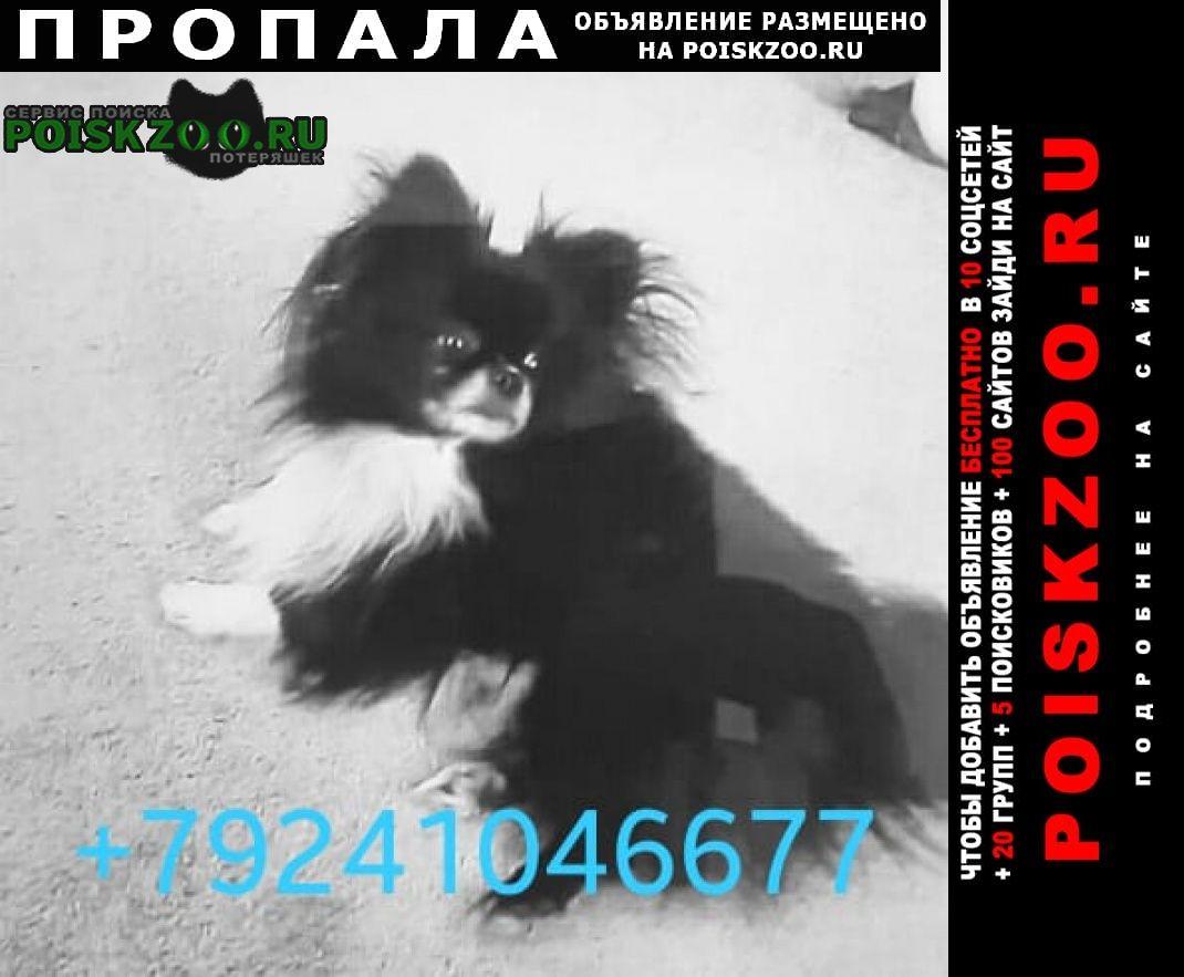 Пропала собака кобель в конце января в с. сосновка Хабаровск
