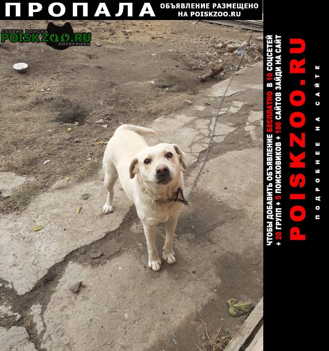 Пропала собака Михайловск Ставропольский край