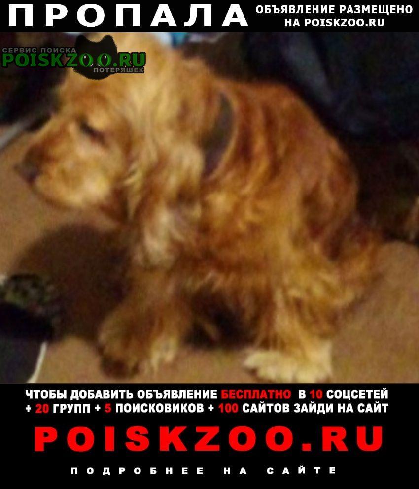 Пропала собака кобель самовыгул. Саратов