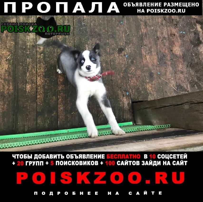 Пропала собака Мытищи
