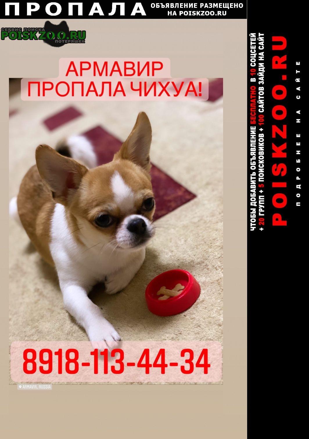 Пропала собака кобель Армавир
