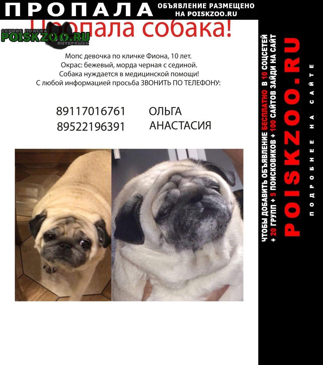 Пропала собака ночью 1.03 в красносельский р-не Санкт-Петербург