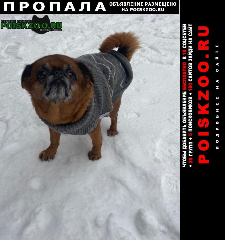 Пропала собака кобель фил парк мальчик гриша Москва