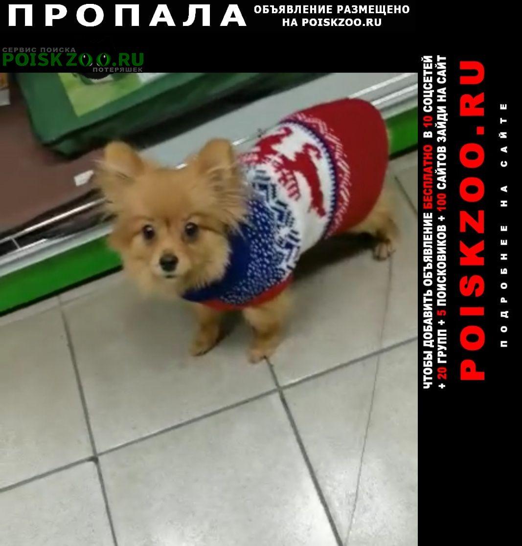 Пропала собака померанский шпиц Хабаровск