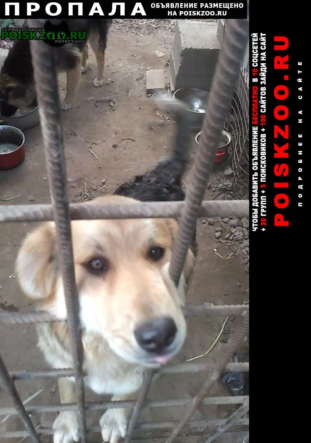 Пропала собака кобель фрунзенский район. Санкт-Петербург