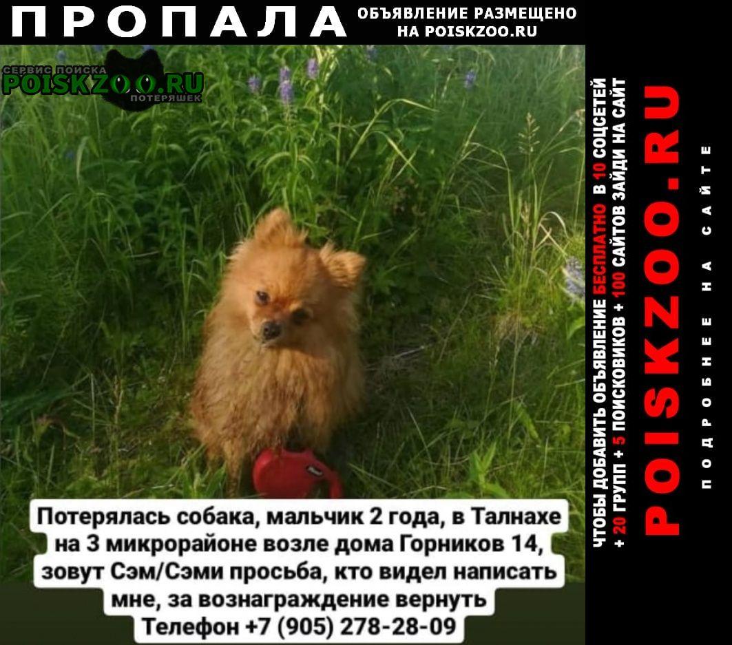 Пропала собака кобель шпиц Норильск