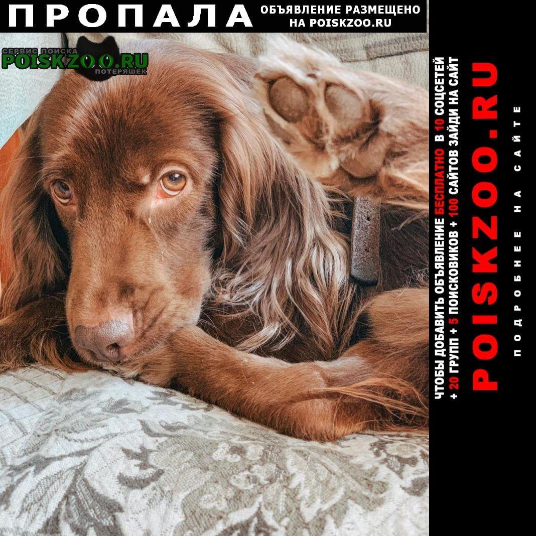 Пропала собака кобель коричневый спаниель Краснодар