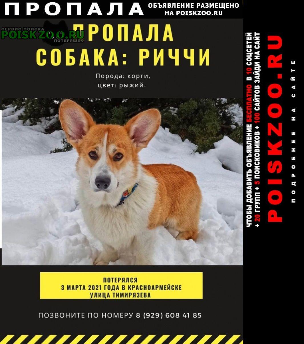 Пропала собака кобель корги Красноармейск (Московская обл.)