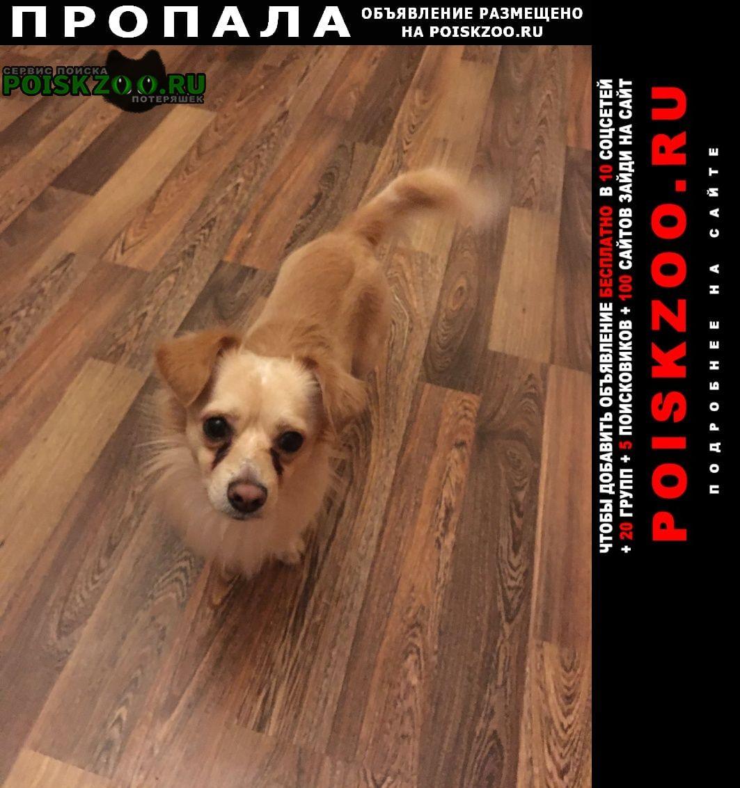 Пропала собака кобель помогите найти друга Оренбург