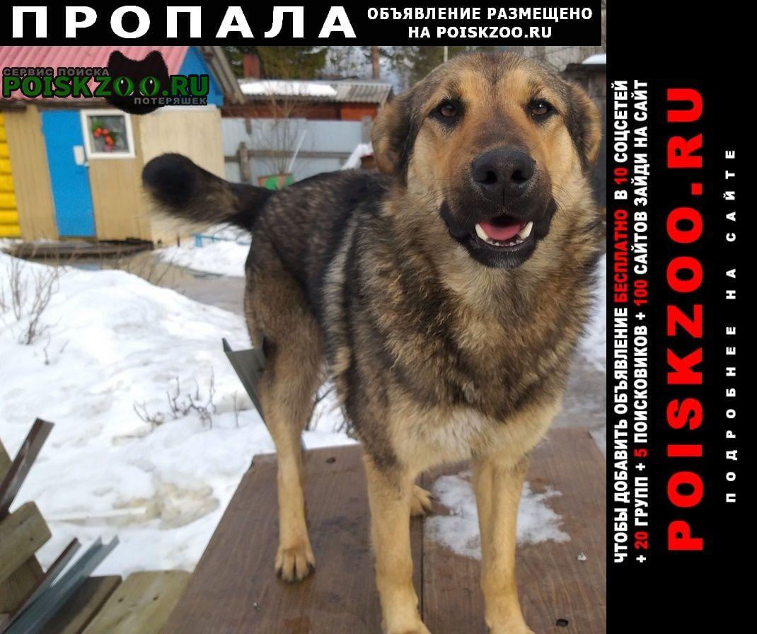Пропала собака кобель Архангельск