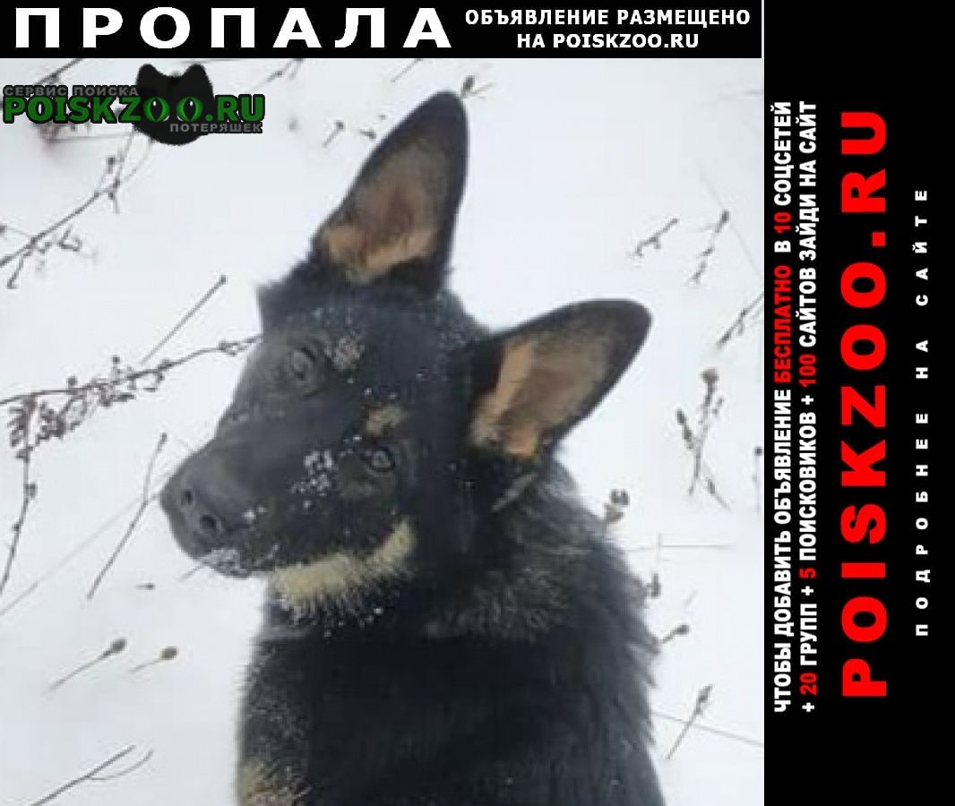 Пропала собака английский сеттер и немецкая овчарка Нижний Новгород