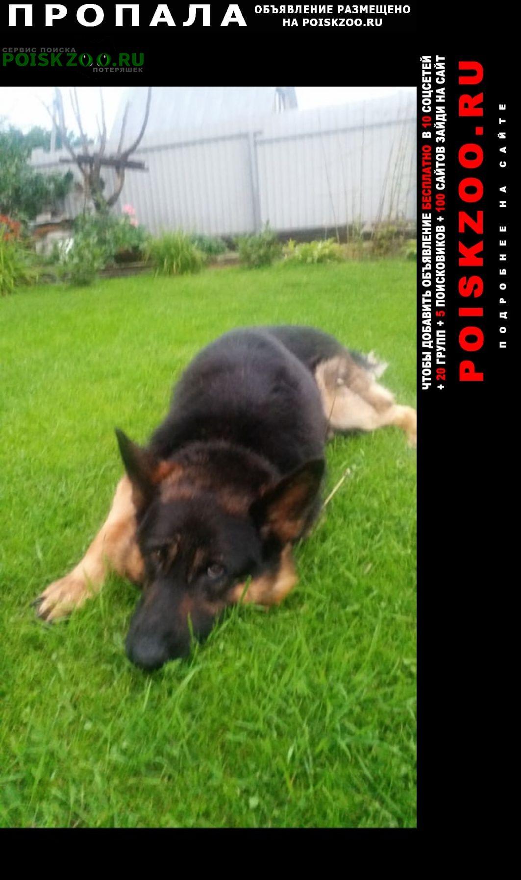 Пропала собака кобель кличка рик Деденево