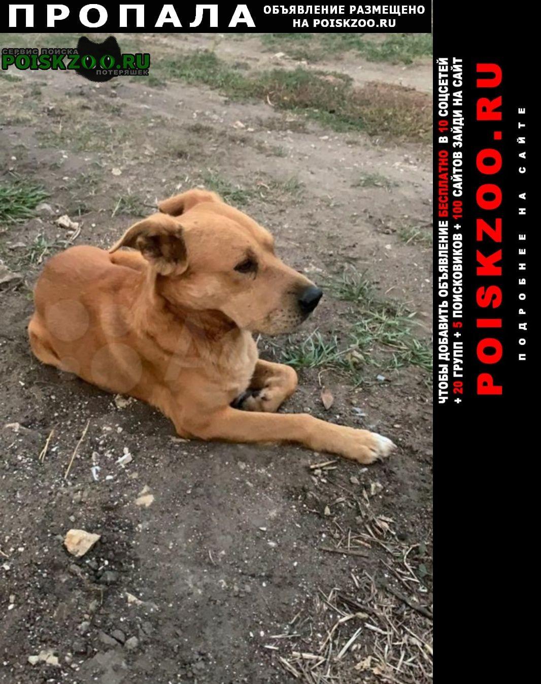 Пропала собака кобель рыжий пёс- члены семьи Липецк