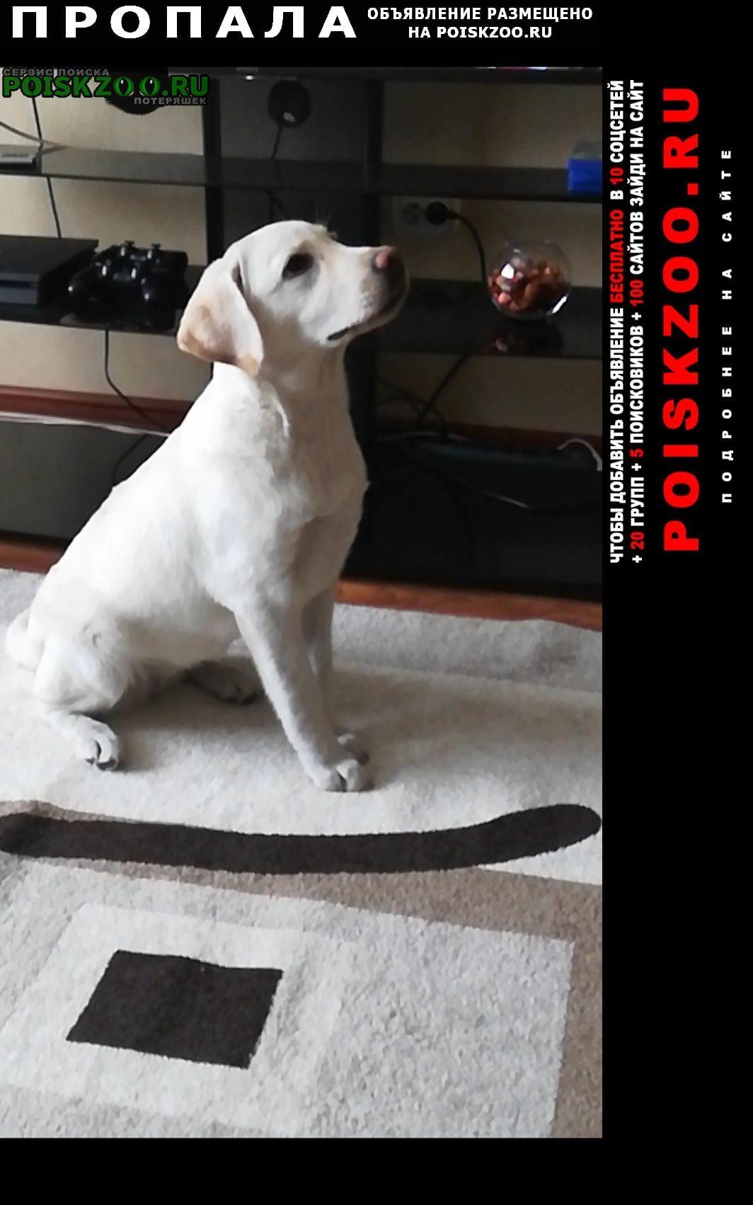 Пропала собака помогите найти. Омск