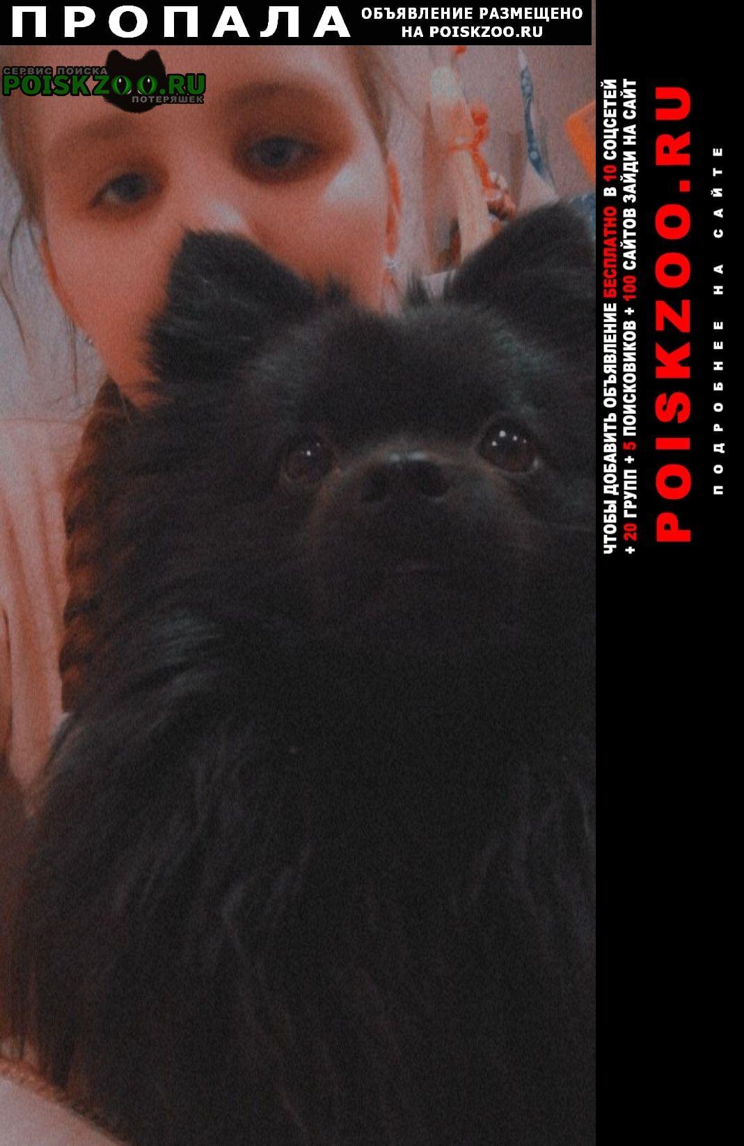 Пропала собака кобель Первоуральск