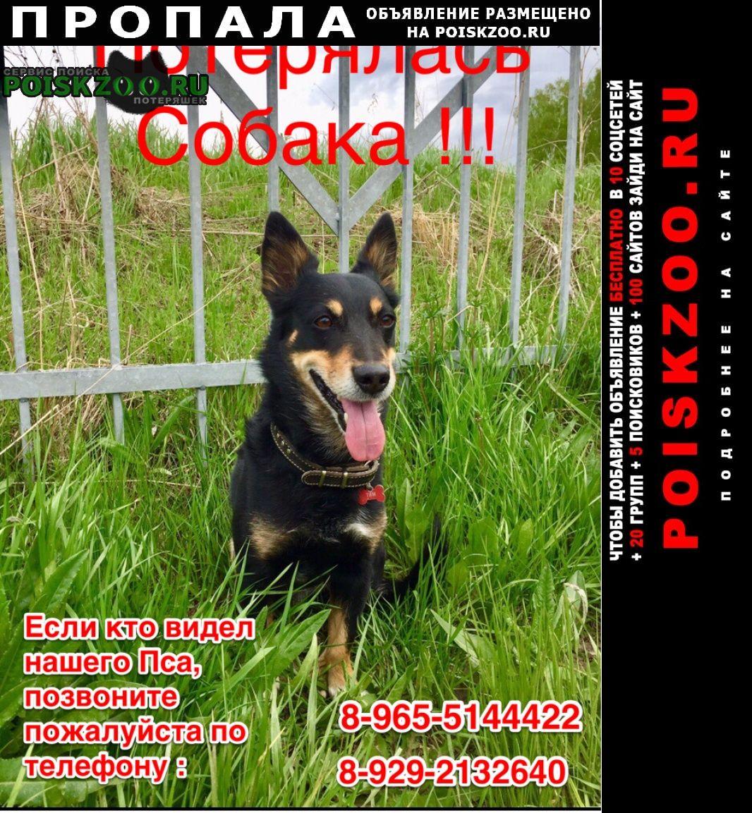 Пропала собака кобель 20 февраля Сысерть