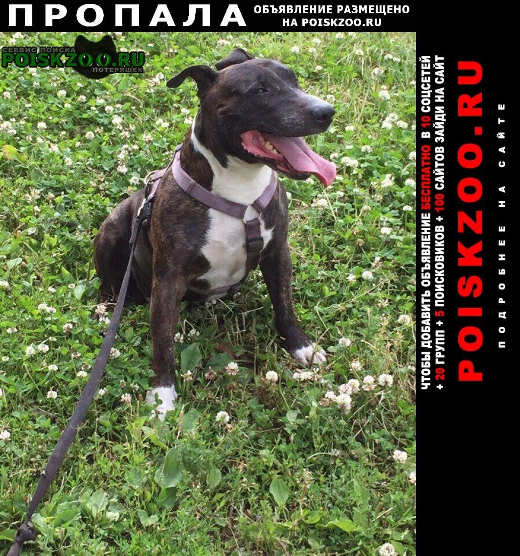 Пропала собака кобель Санкт-Петербург