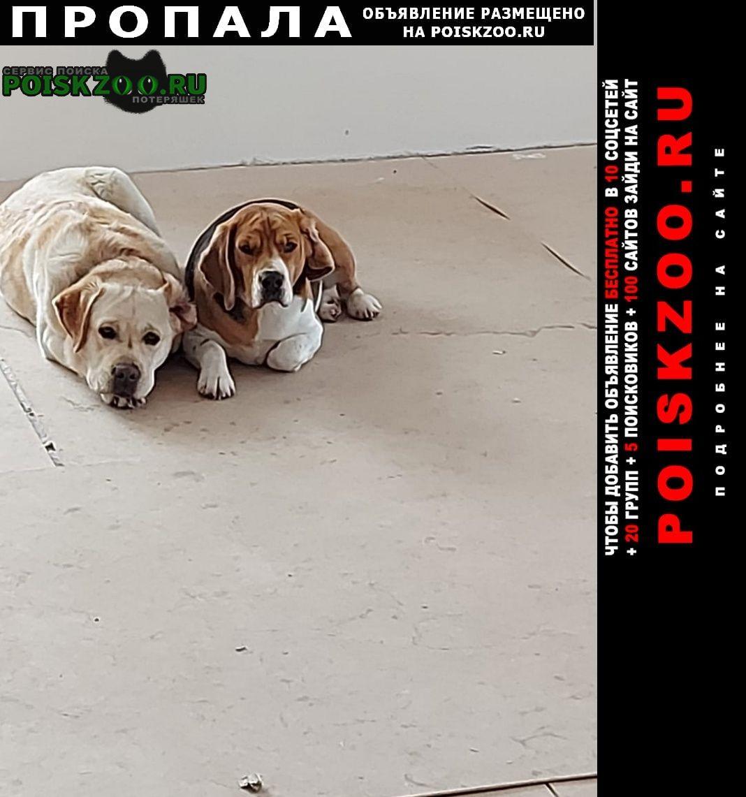 Пропала собака кобель и собаки Одинцово