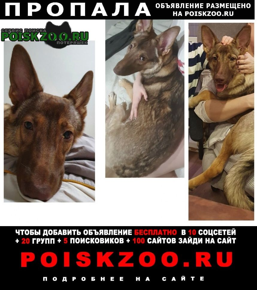 Пропала собака дворняга, жби Екатеринбург